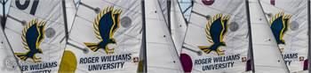 2016 Laser Performance Gold Standard Sails - set of 18